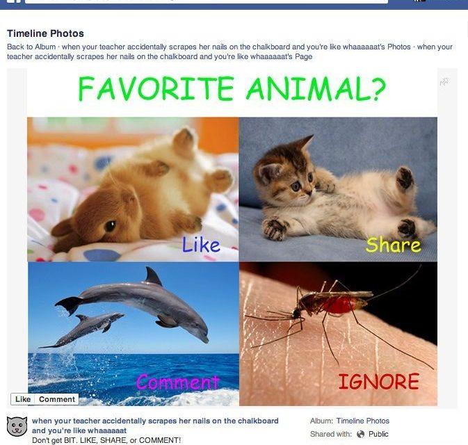 Facebook накажет записи с «баянами» и выпрашиванием лайков